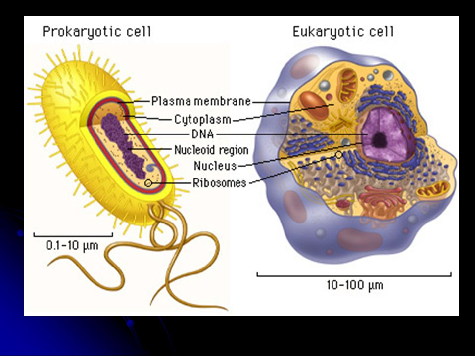 What's the difference between prokaryotes and eukaryotes.