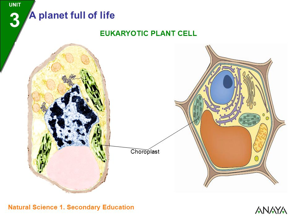 UNIT 3 A planet full of life Natural Science 1.