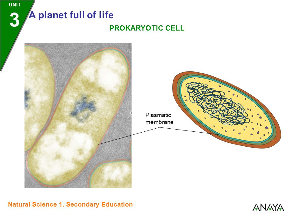 UNIT 3 A planet full of life Natural Science 1. Secondary Education Plasmatic membrane PROKARYOTIC CELL