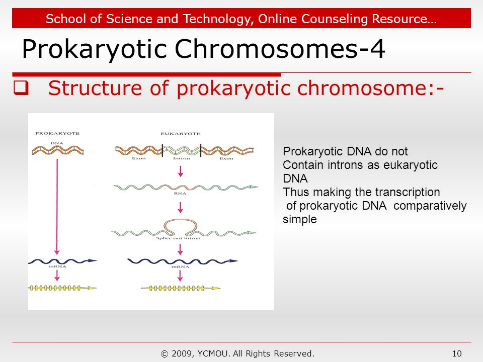 School of Science and Technology, Online Counseling Resource… © 2009, YCMOU. All Rights Reserved.10 Prokaryotic Chromosomes-4  Structure of prokaryot
