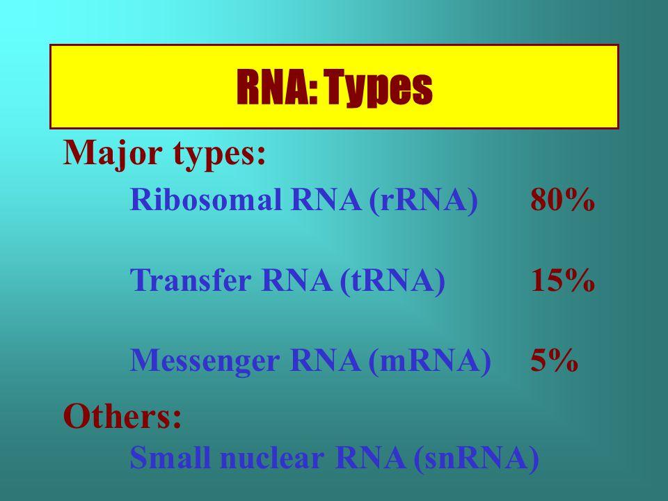 RNA: Types Major types: Ribosomal RNA (rRNA) 80% Transfer RNA (tRNA) 15% Messenger RNA (mRNA) 5% Others: Small nuclear RNA (snRNA)
