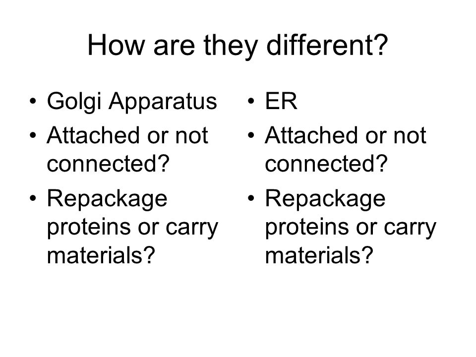 How are they different. Golgi Apparatus Attached or not connected.