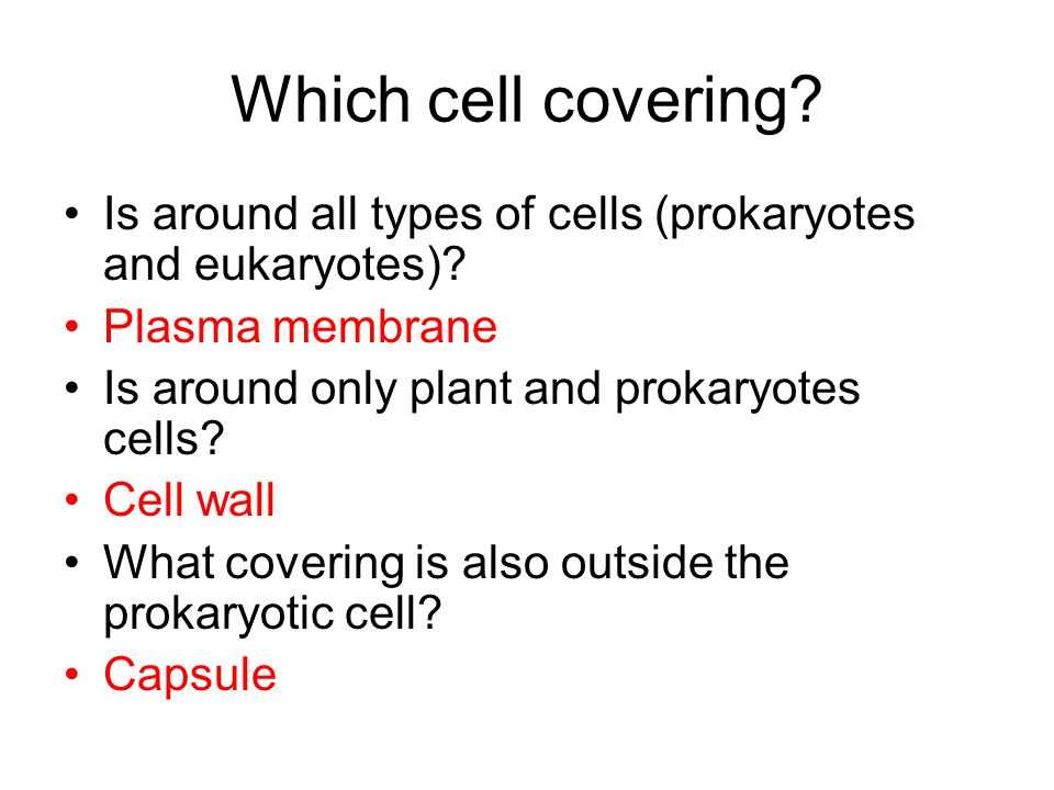 Which cell covering. Is around all types of cells (prokaryotes and eukaryotes).