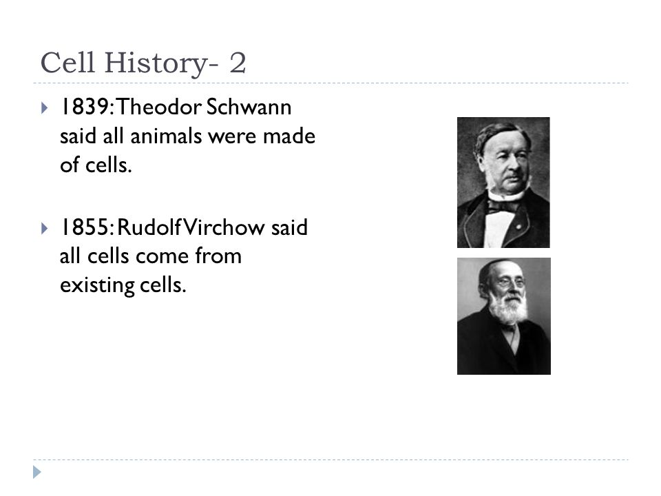 Cell History- 2  1839: Theodor Schwann said all animals were made of cells.