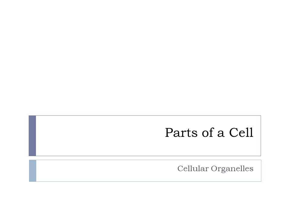 Parts of a Cell Cellular Organelles