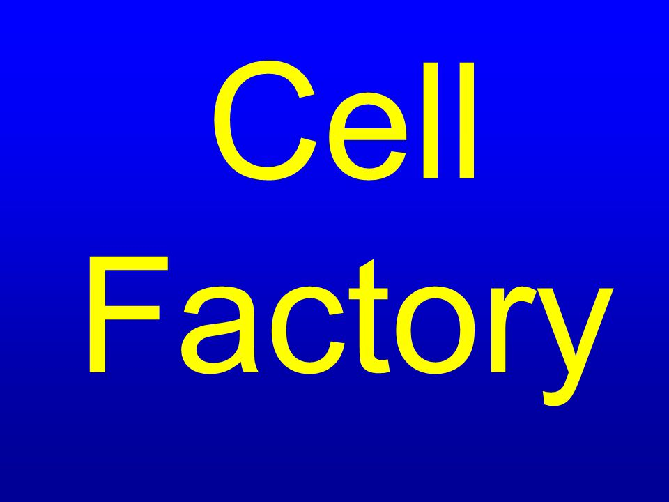 $400 Eukaryotic cells have a nucleus. Examples are plant and animal cells.