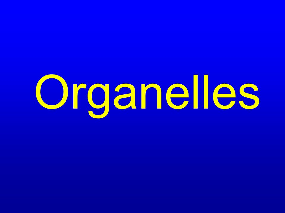 $300 Organize living things in order from lowest to highest level of organization.