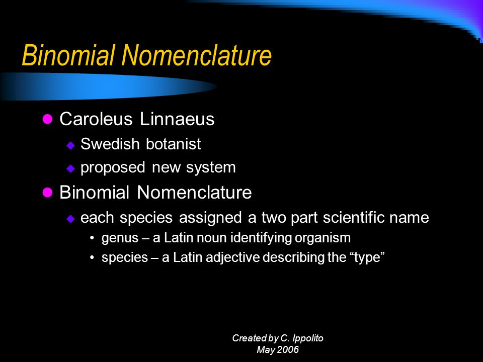 Created by C. Ippolito May 2006 Early Efforts at Naming Organisms early scientific names described in details  names were too long common names - use