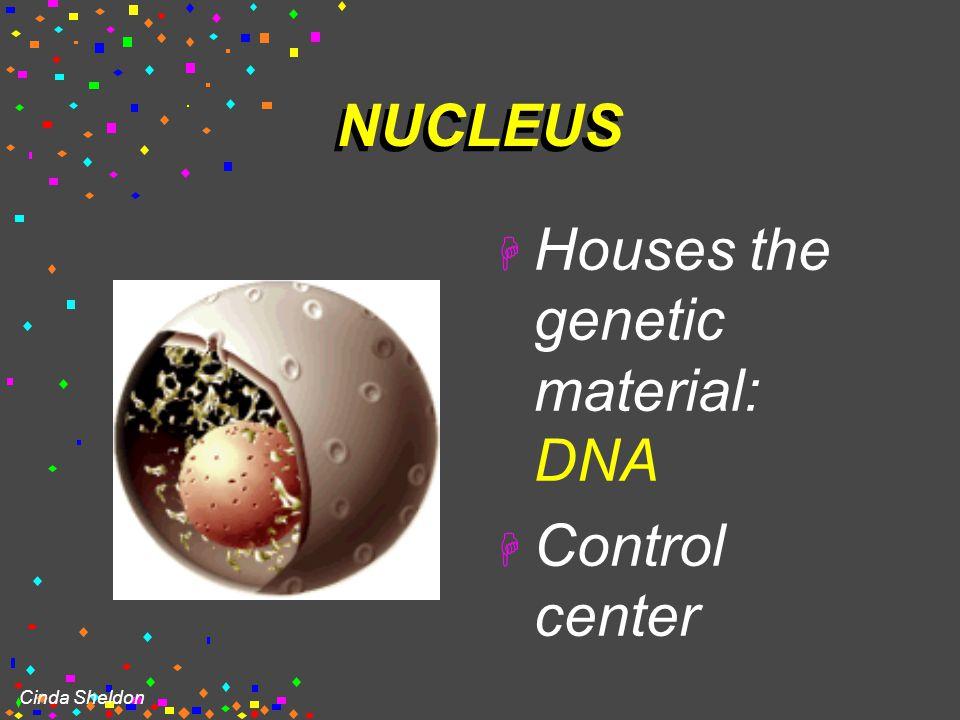 Cinda Sheldon EUKARYOTIC CELLS  You will make an edible cell model block day – Nov. 29 + 30