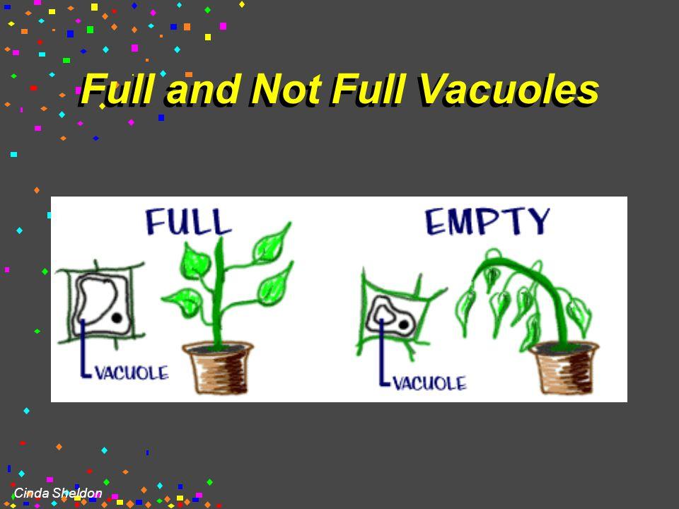 Cinda Sheldon Central Vacuole in Plants