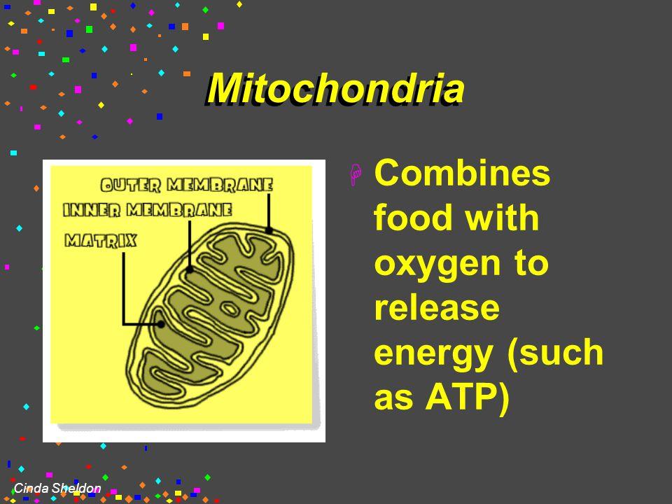 "Cinda Sheldon MITOCHONDRIA ""cell's powerhouse"""