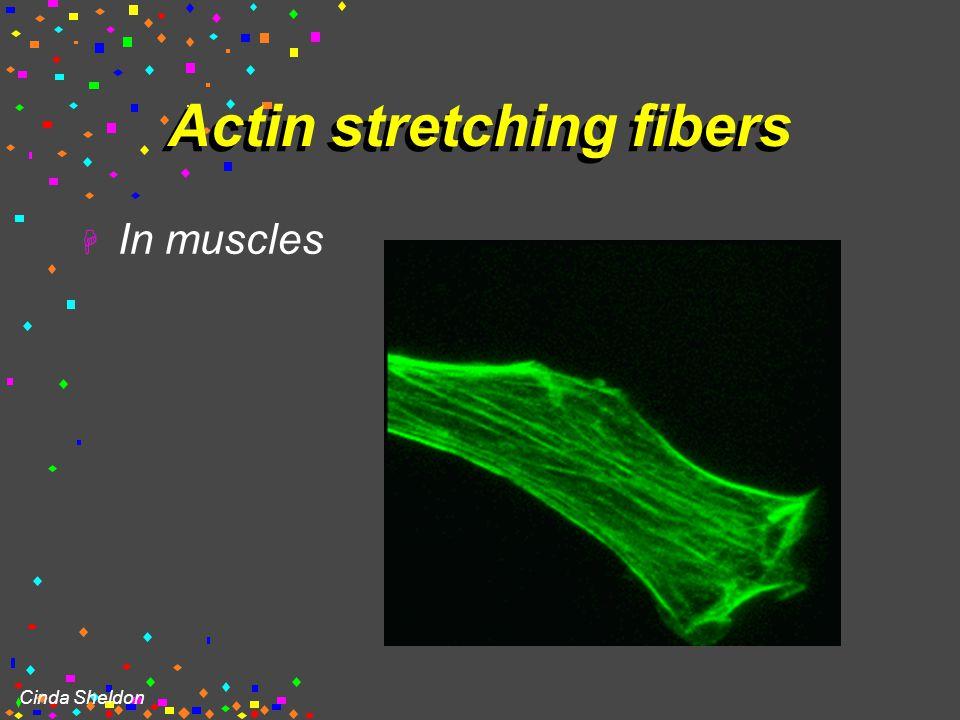 Cinda Sheldon Microtubule