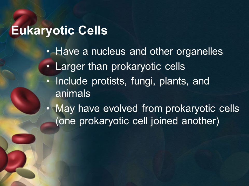Eukaryotic Cells Have a nucleus and other organelles Larger than prokaryotic cells Include protists, fungi, plants, and animals May have evolved from prokaryotic cells (one prokaryotic cell joined another)