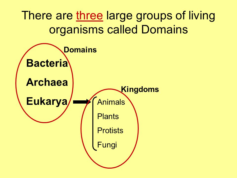 There are three large groups of living organisms called Domains Bacteria Archaea Eukarya Animals Plants Protists Fungi Domains Kingdoms