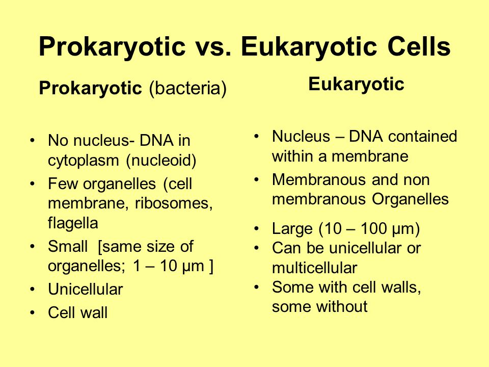 Prokaryotic vs. Eukaryotic Cells Prokaryotic (bacteria) No nucleus- DNA in cytoplasm (nucleoid) Few organelles (cell membrane, ribosomes, flagella Sma