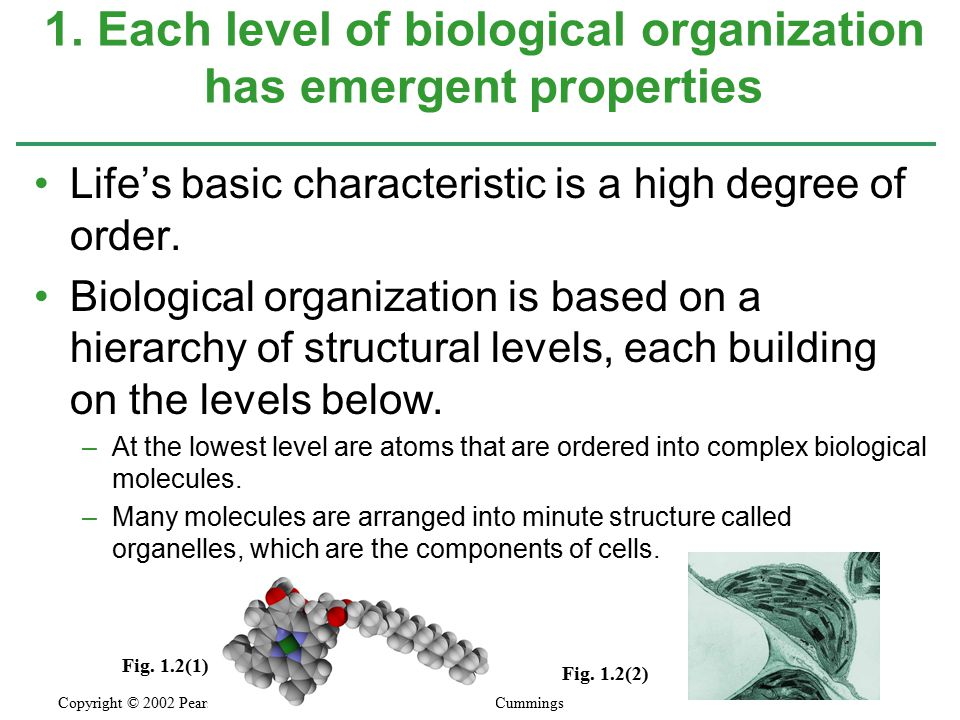 Life's basic characteristic is a high degree of order.