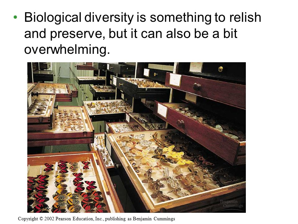 Biological diversity is something to relish and preserve, but it can also be a bit overwhelming.
