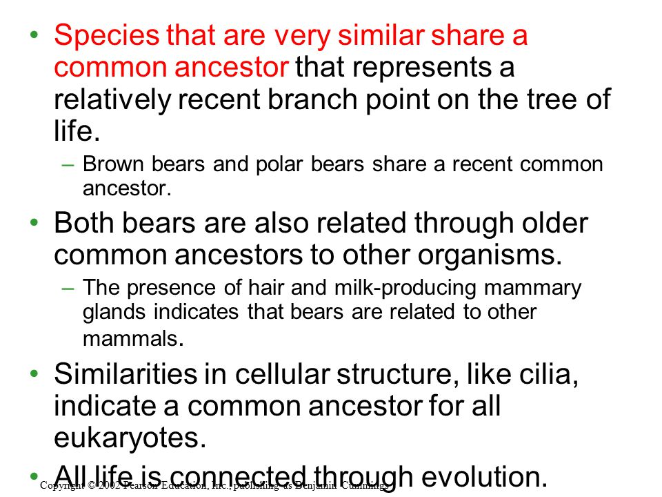Species that are very similar share a common ancestor that represents a relatively recent branch point on the tree of life. –Brown bears and polar bea