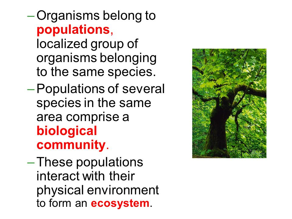 –Organisms belong to populations, localized group of organisms belonging to the same species.