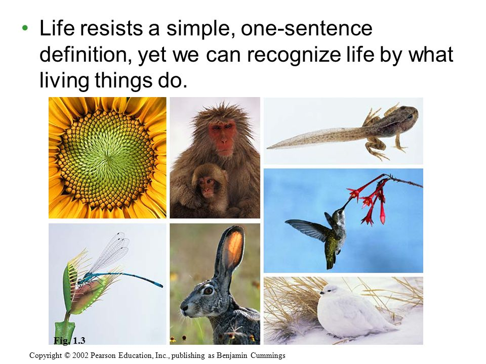 Life resists a simple, one-sentence definition, yet we can recognize life by what living things do. Copyright © 2002 Pearson Education, Inc., publishi