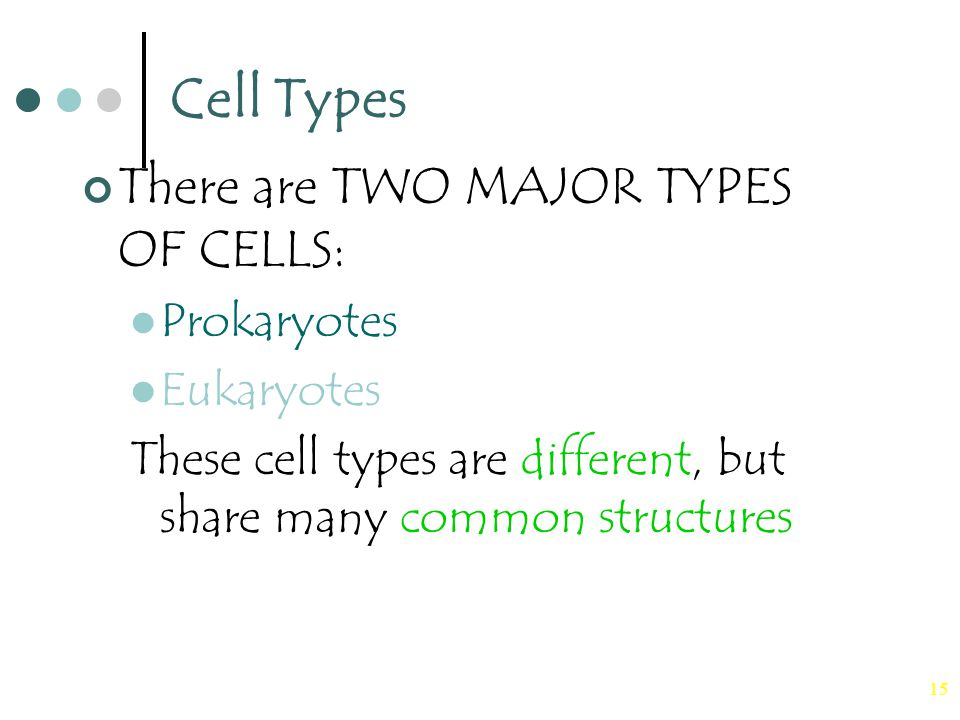 15 Cell Types There are TWO MAJOR TYPES OF CELLS: Prokaryotes Eukaryotes These cell types are different, but share many common structures