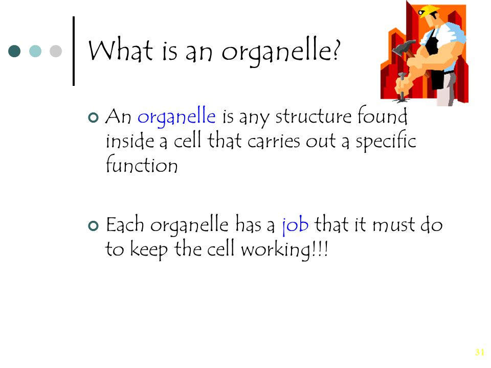 31 What is an organelle? An organelle is any structure found inside a cell that carries out a specific function Each organelle has a job that it must