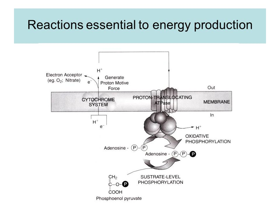 Reactions essential to energy production