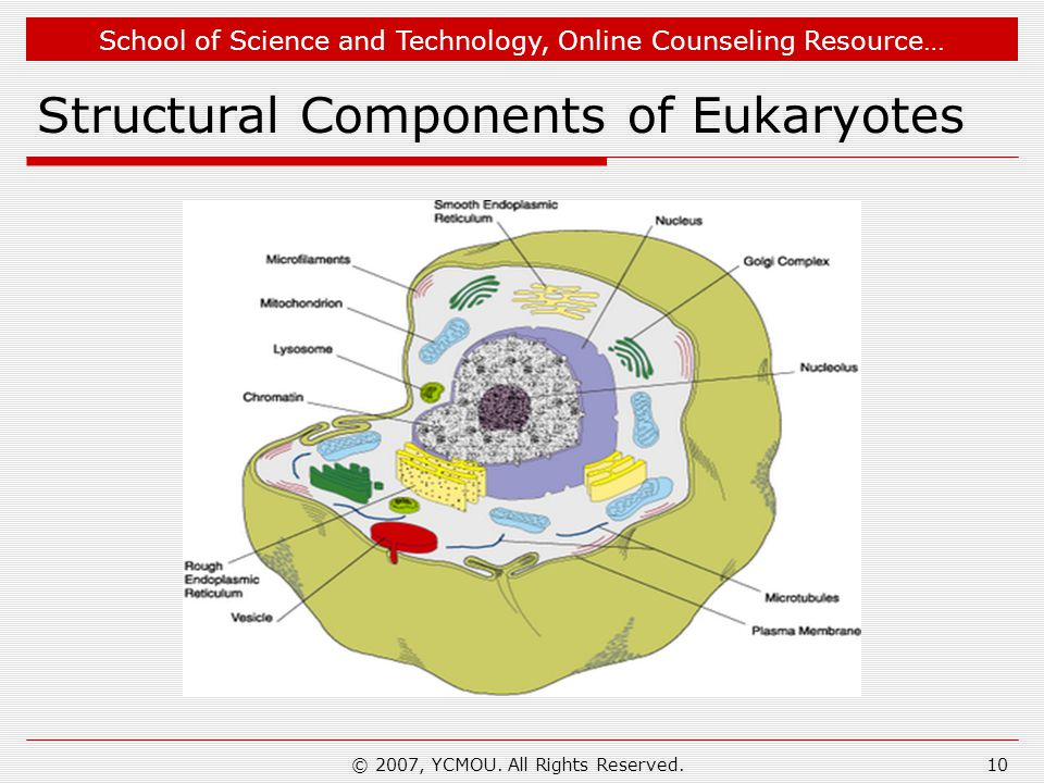 School of Science and Technology, Online Counseling Resource… Structural Components of Eukaryotes © 2007, YCMOU.