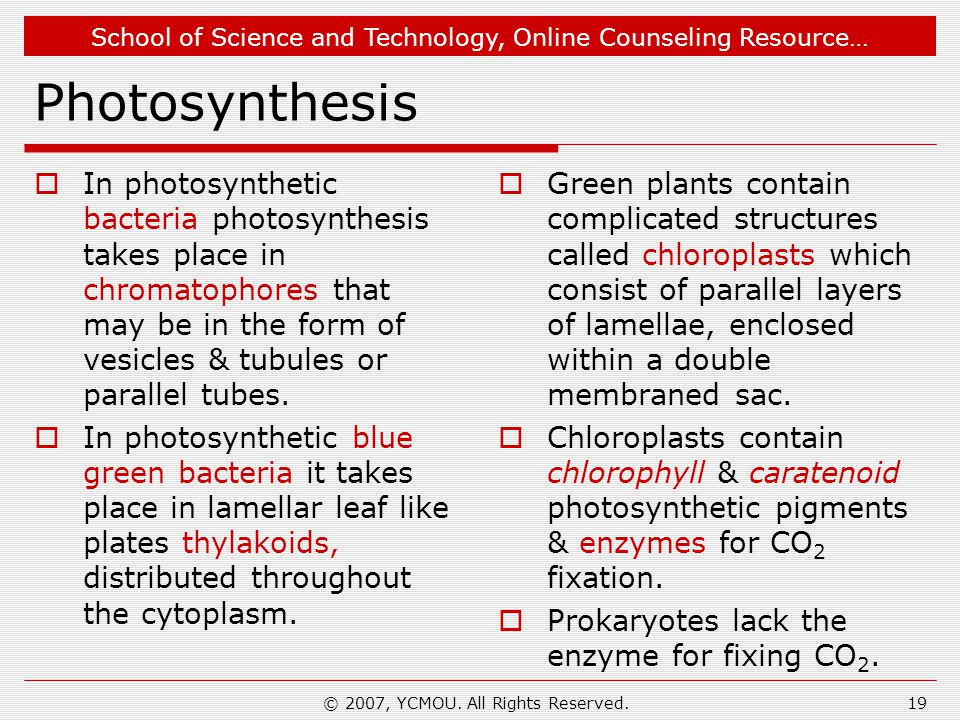 School of Science and Technology, Online Counseling Resource… Photosynthesis  In photosynthetic bacteria photosynthesis takes place in chromatophores