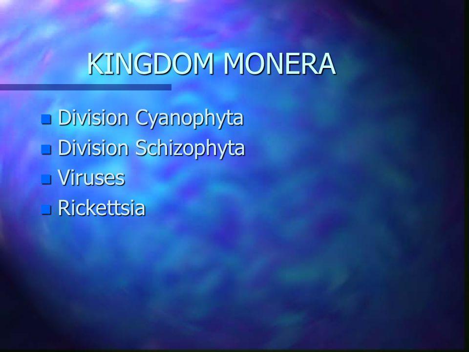 5 KINGDOMS n MONERA n PROTISTA n FUNGI n ANIMAL n ANIMAL (METAZOA) n PLANT n PLANT (METAPHYTA)