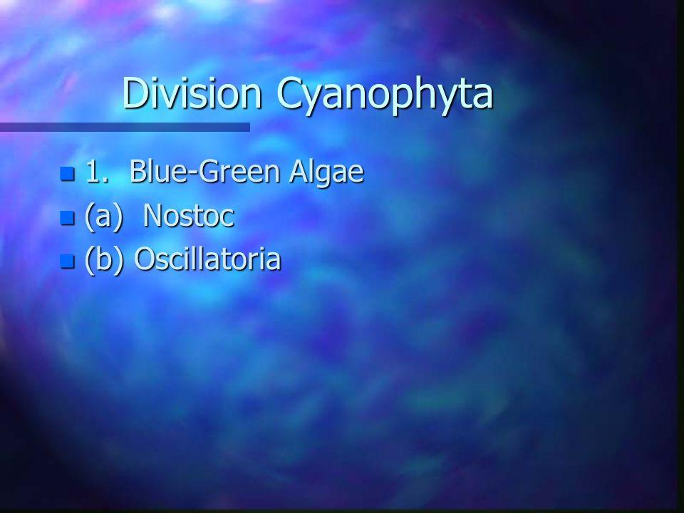 KINGDOM MONERA n 1. Prokaryotic Cells n 2. Reproduce by binary fission and n fragmentation.