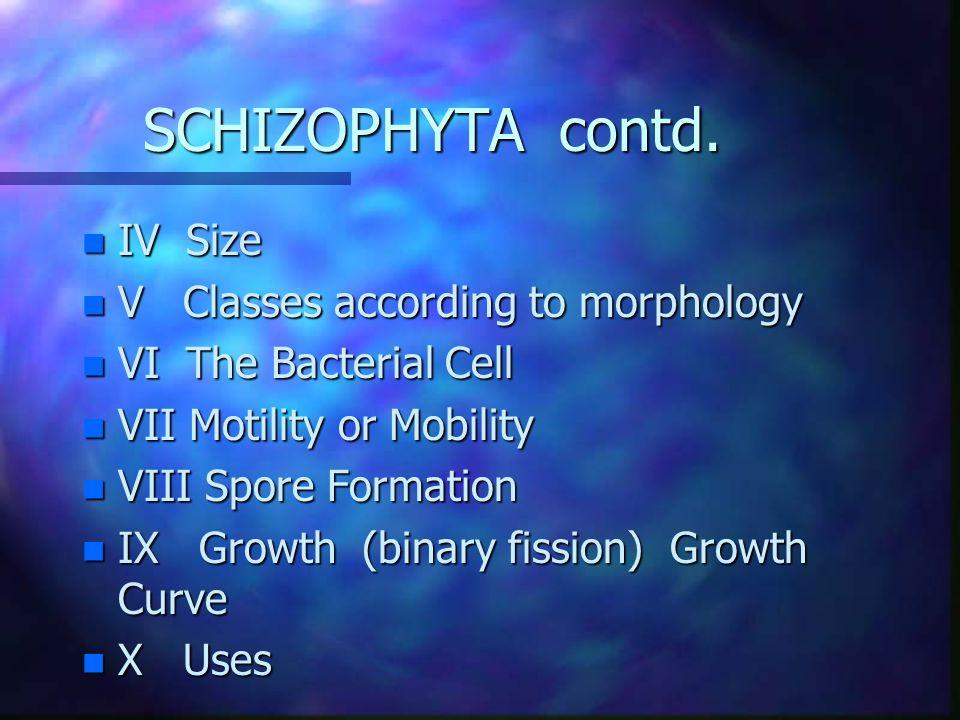 SCHIZOPHYTA contd.