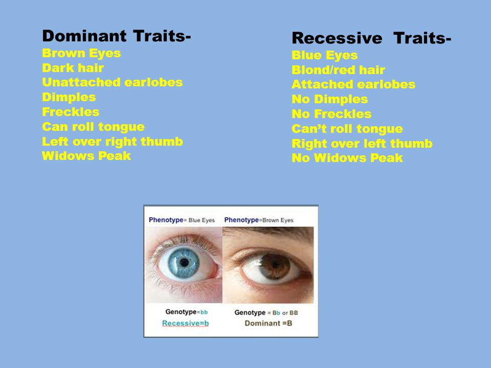 Dominant Traits- Brown Eyes Dark hair Unattached earlobes Dimples Freckles Can roll tongue Left over right thumb Widows Peak Recessive Traits- Blue Eyes Blond/red hair Attached earlobes No Dimples No Freckles Can't roll tongue Right over left thumb No Widows Peak