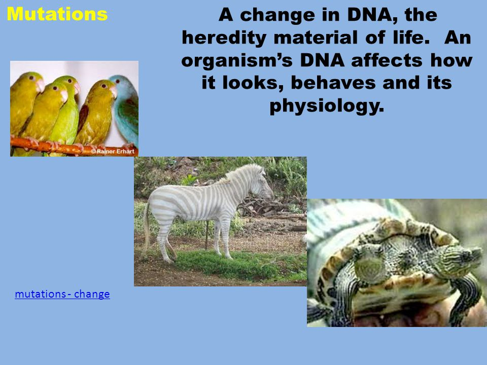 Mutations A change in DNA, the heredity material of life.