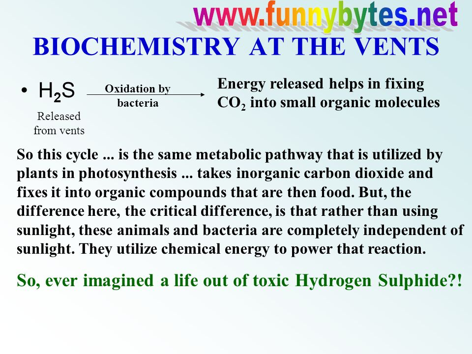 BIOCHEMISTRY AT THE VENTS H 2 S Oxidation by bacteria Energy released helps in fixing CO 2 into small organic molecules So this cycle...