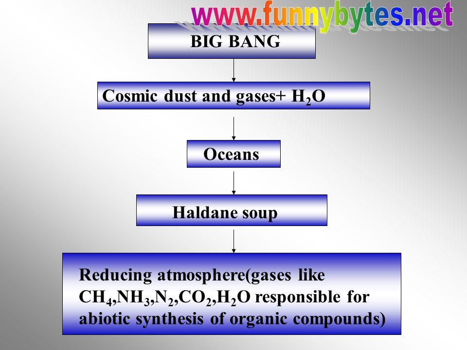 Amylase Sunlight Ascorbic Acid + Dye Chloroplast e - + Dye Reduced Dye (colour change) AmylaseStarch Maltose