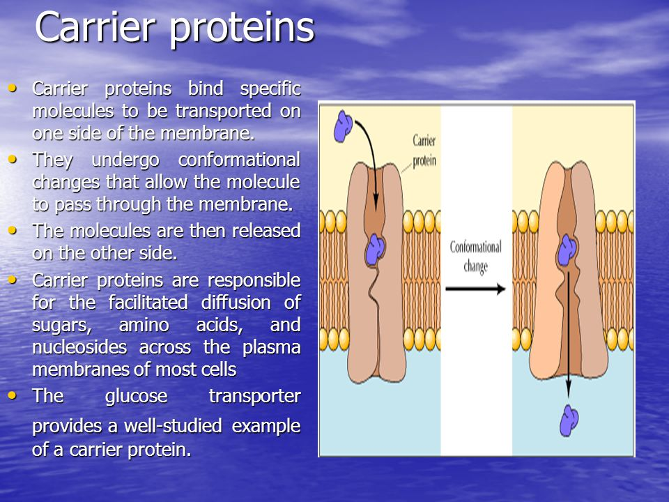 Carrier proteins Carrier proteins Needs energy Needs energy Active transport
