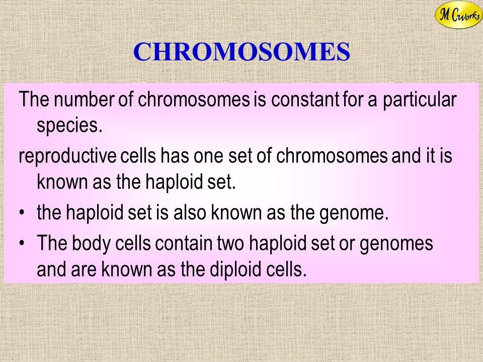 CHROMOSOMES The number of chromosomes is constant for a particular species.