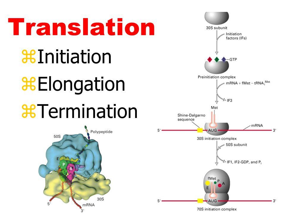 Translation zInitiation zElongation zTermination