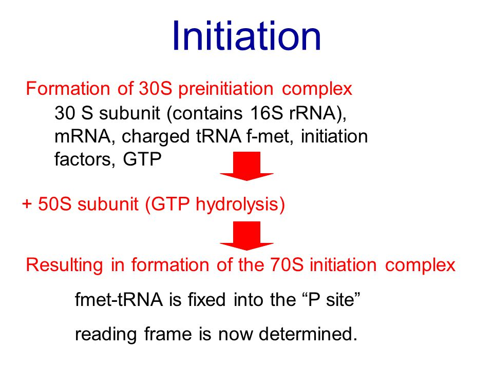 Initiation Formation of 30S preinitiation complex 30 S subunit (contains 16S rRNA), mRNA, charged tRNA f-met, initiation factors, GTP + 50S subunit (G