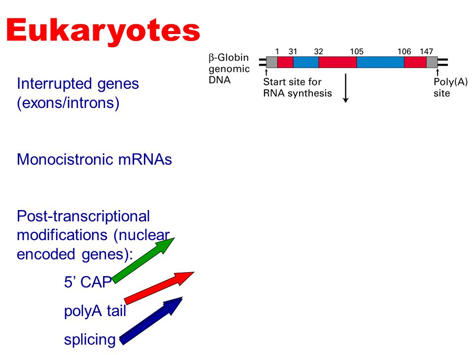 Copyright (c) by W. H. Freeman and Company The roles of RNA in protein synthesis