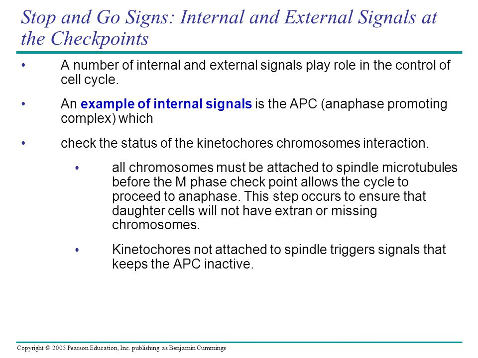Copyright © 2005 Pearson Education, Inc. publishing as Benjamin Cummings Stop and Go Signs: Internal and External Signals at the Checkpoints A number