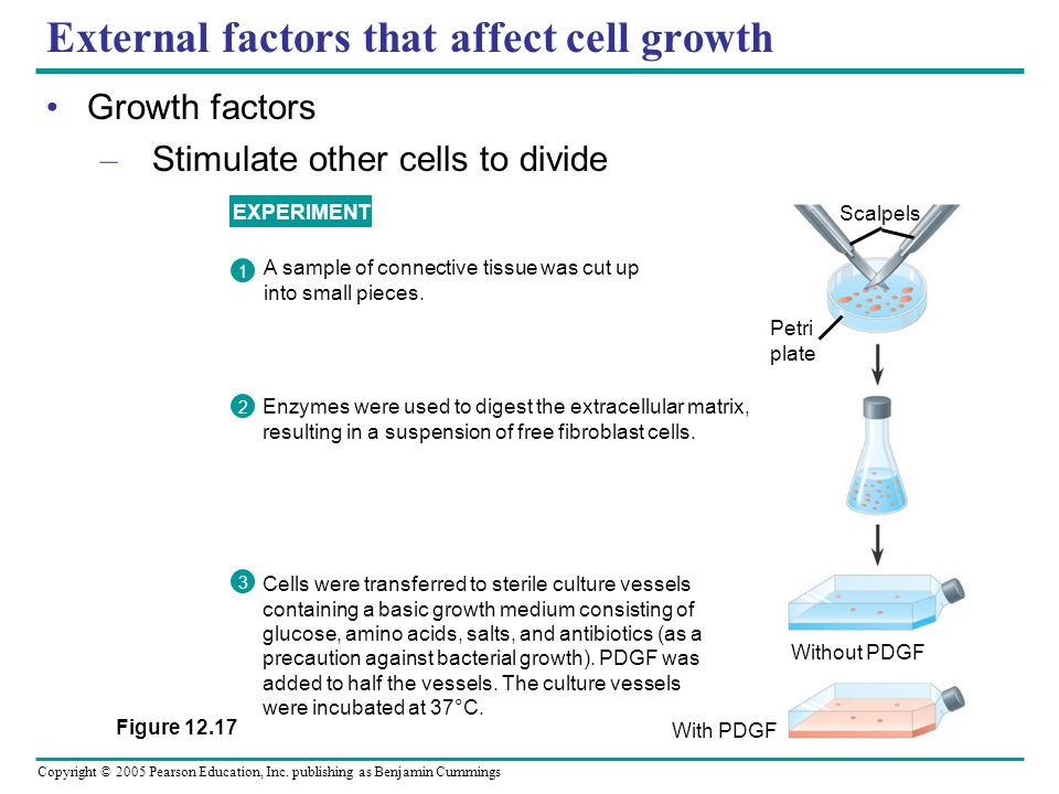 Copyright © 2005 Pearson Education, Inc. publishing as Benjamin Cummings External factors that affect cell growth Growth factors – Stimulate other cel