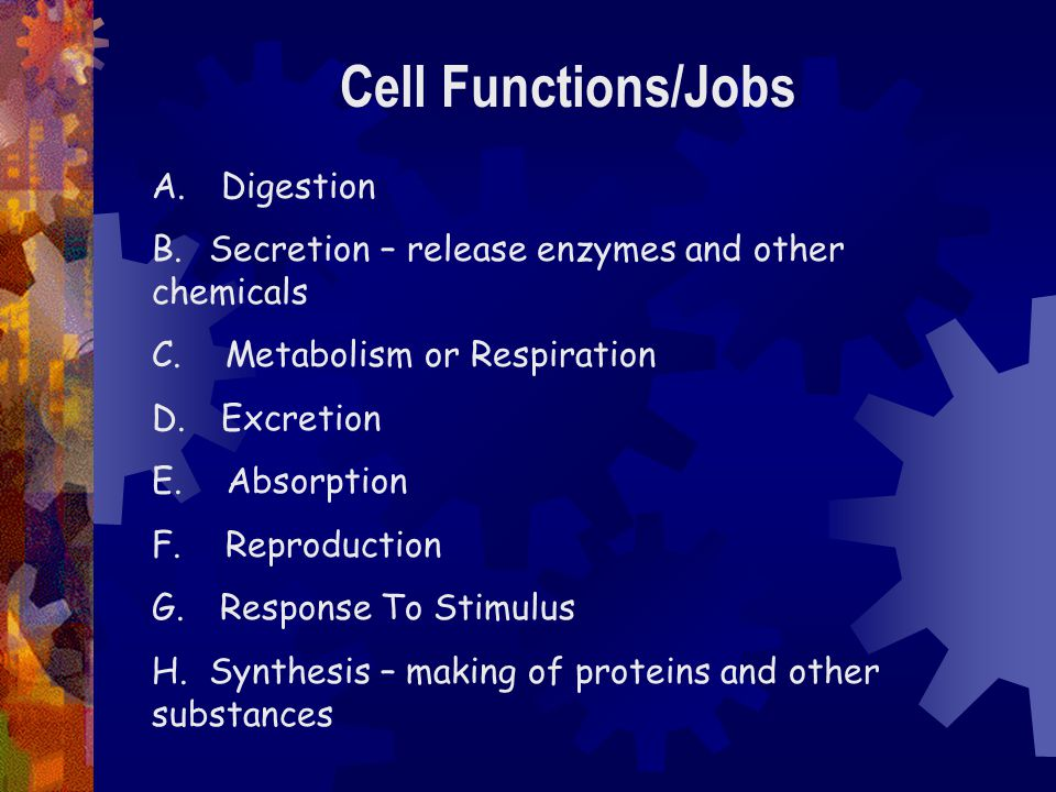 Cell Functions/Jobs A. Digestion B. Secretion – release enzymes and other chemicals C. Metabolism or Respiration D. Excretion E. Absorption F. Reprodu