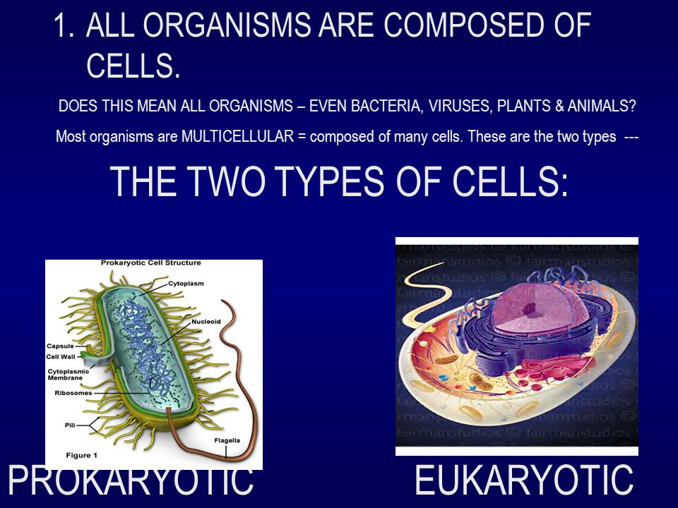 1.ALL ORGANISMS ARE COMPOSED OF CELLS. DOES THIS MEAN ALL ORGANISMS – EVEN BACTERIA, VIRUSES, PLANTS & ANIMALS? Most organisms are MULTICELLULAR = com