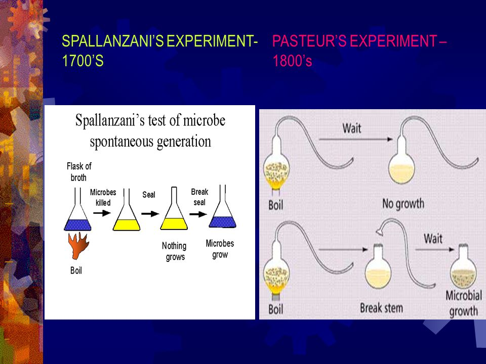 SPALLANZANI'S EXPERIMENT- 1700'S PASTEUR'S EXPERIMENT – 1800's
