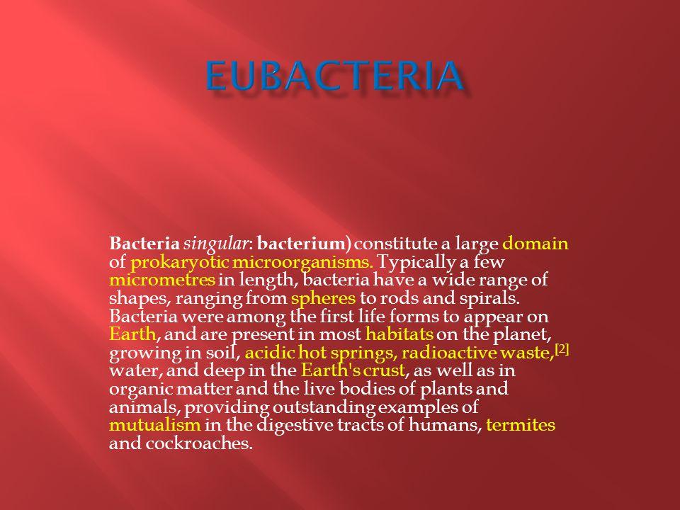 Bacteria singular : bacterium ) constitute a large domain of prokaryotic microorganisms.