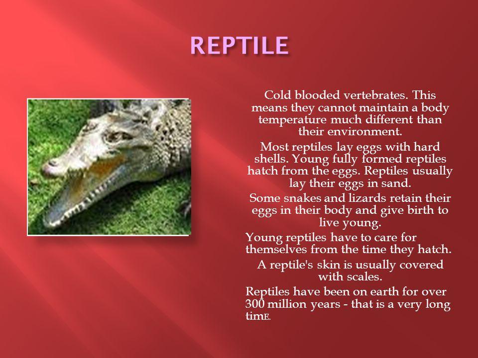 REPTILE Cold blooded vertebrates.