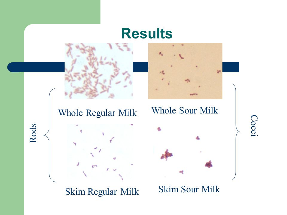 Results Whole Regular Milk Whole Sour Milk Skim Regular Milk Skim Sour Milk Rods Cocci