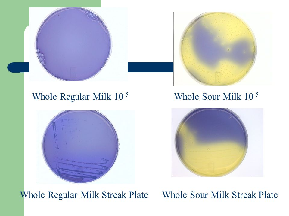 Whole Regular Milk Streak Plate Whole Sour Milk 10 -5 Whole Sour Milk Streak Plate Whole Regular Milk 10 -5